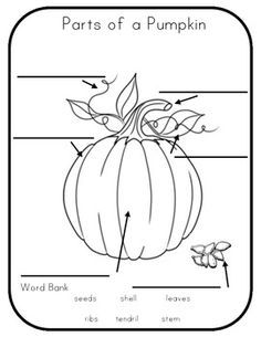 Draw And Label The Parts Of A Pumpkin Google Search Parts Of A Pumpkin Pumpkin Activities Labeling Activities