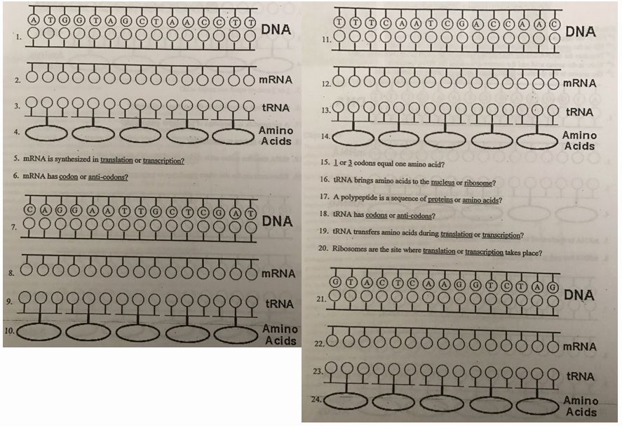 Protein Synthesis Practice Worksheet Lovely Dna Rna and