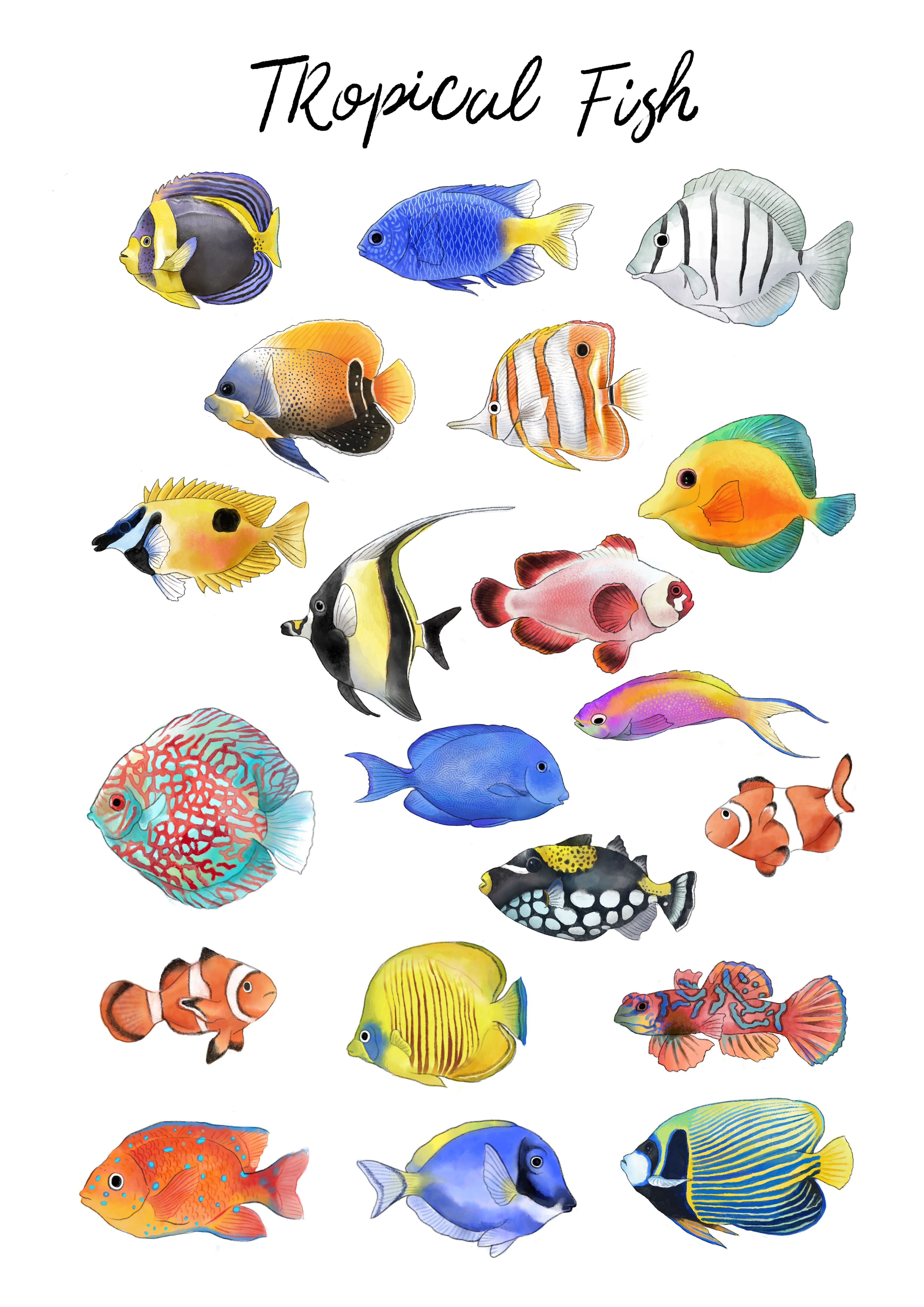 Watercolor Tropical Fish Png Clipart In 2021 Fish Drawings Tropical Fish Art Fish Painting
