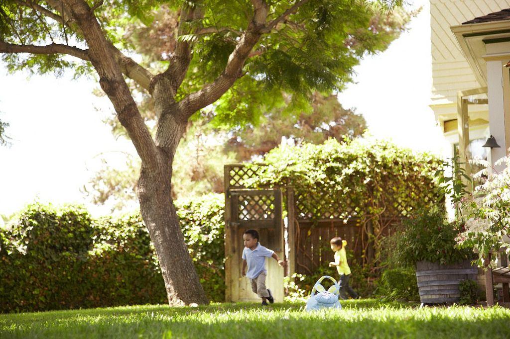 Alamo City Tree Conservation