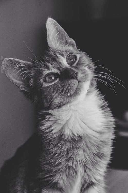the head tilt just increases the cuteness - Aww post