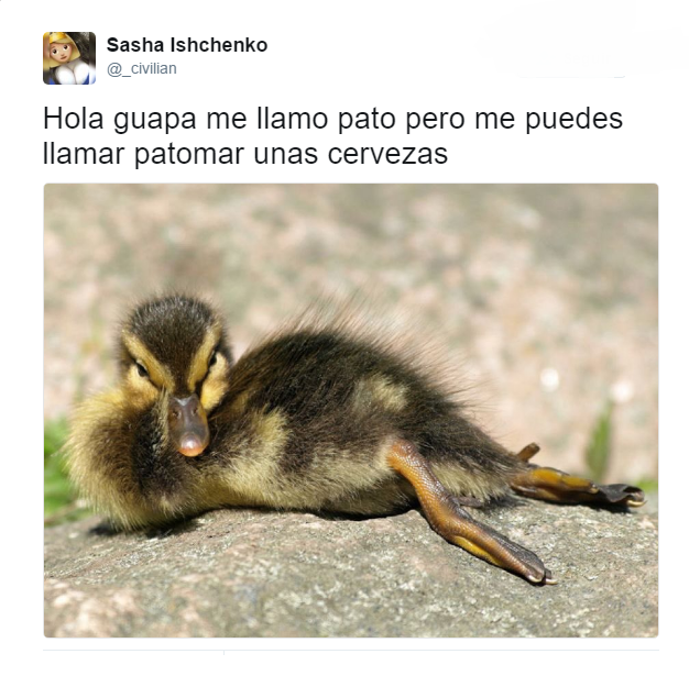 Fotos Divertidas Para Whatsapp Memes Chistes Chistesmalos Imagenesgraciosas Humor Funny Animal Photos Funny Animals Cute Animal Memes