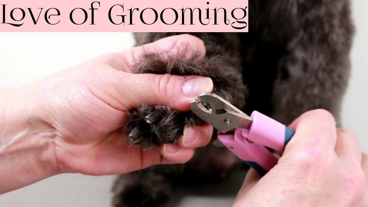 How to Clip Black Dog Nails YouTube Dog nails