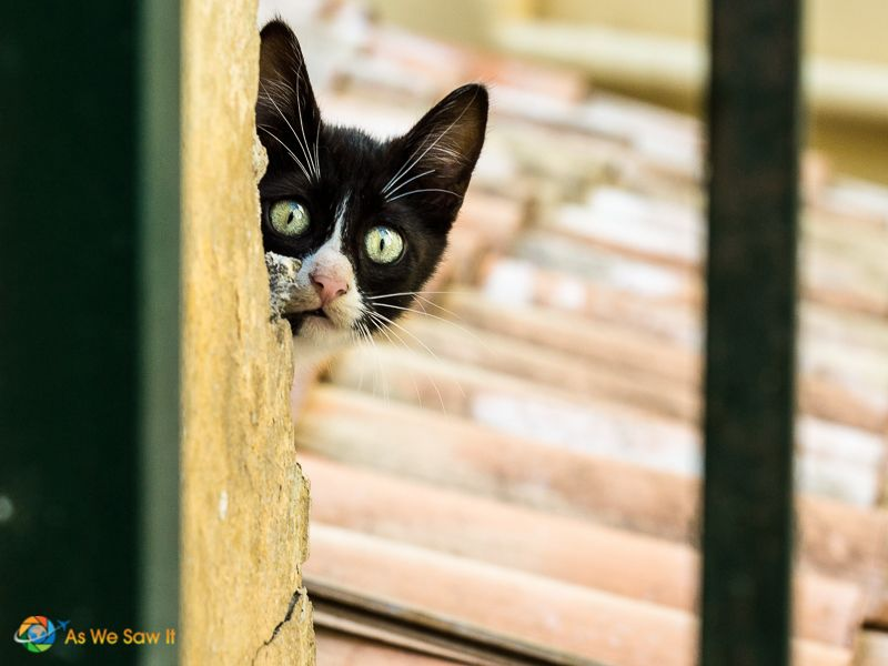 Photo Tips What A Cat Playing Peek A Boo Can Teach You