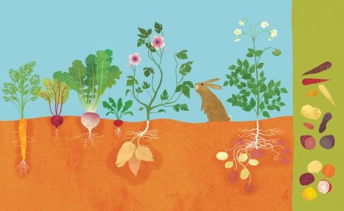 Vegetables Growing Underground | 미술 교육