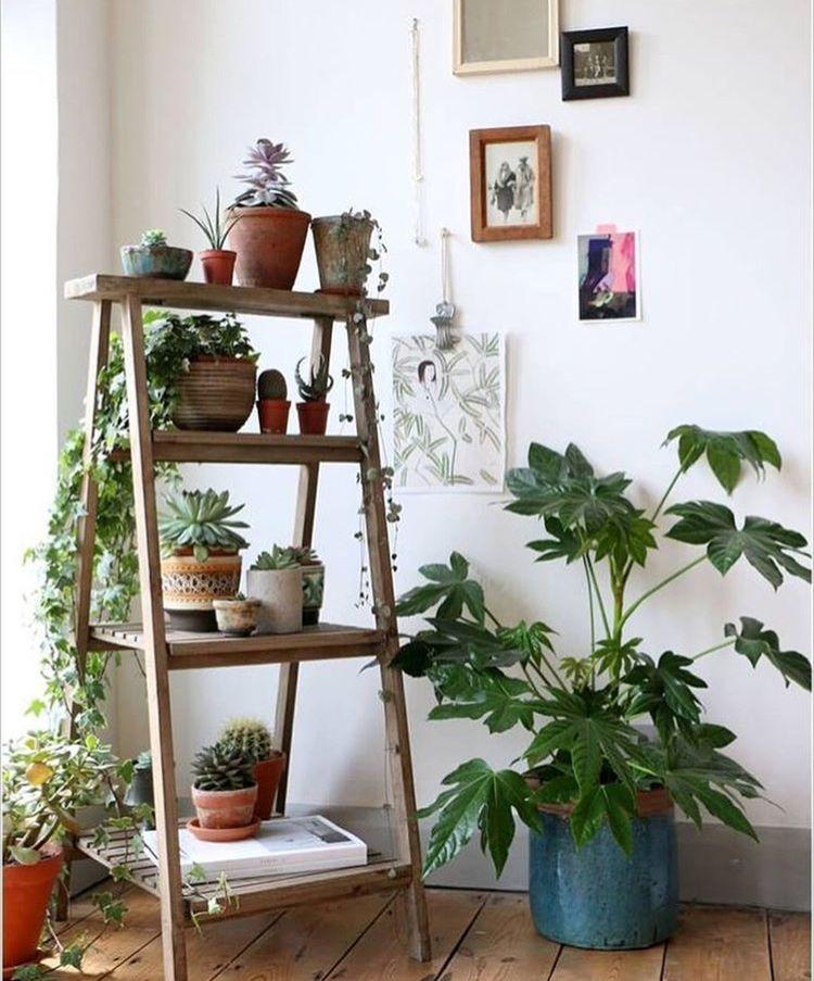 Amazing Idead To Display Indoor Plants