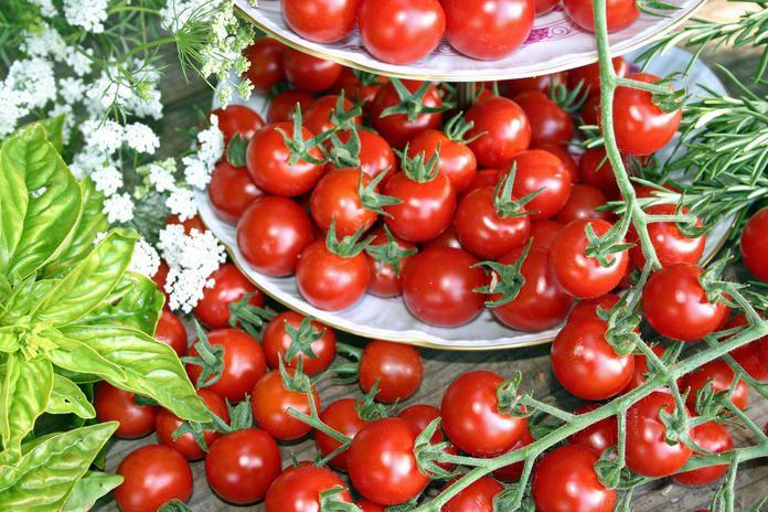Tomaten Gemuse Pflanzen Tomaten Zuchten Und Tomatenanbau