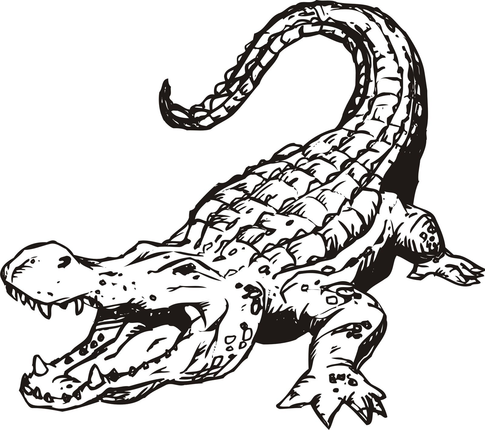 Images For Gt Alligator Drawing Outline