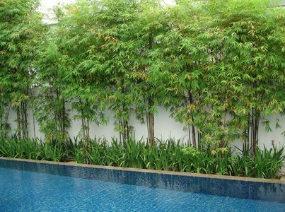 Poolside bamboo privacy screen - could work along fences instead of