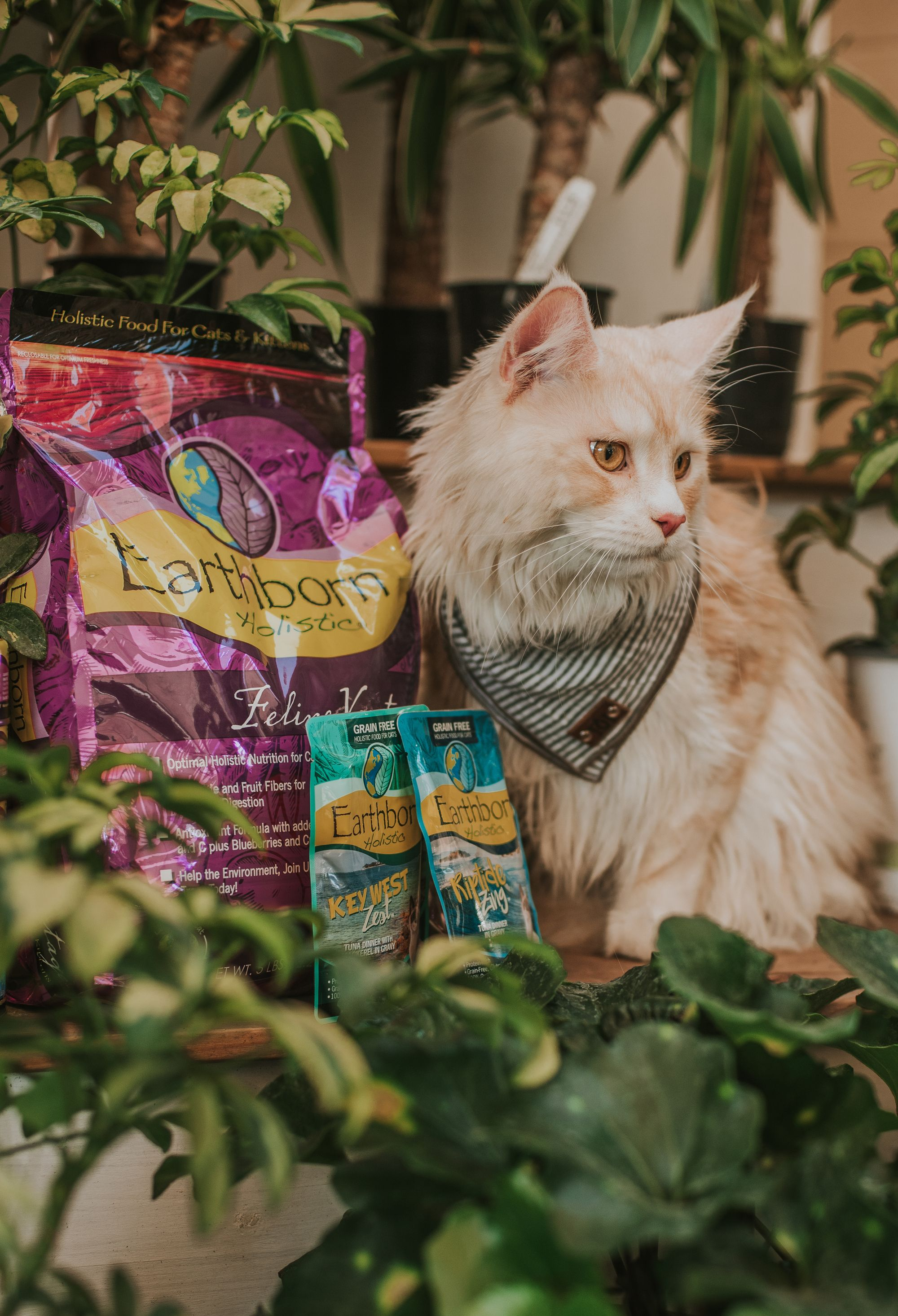 Earthborn Holistic Primitive Feline Grain Free Dry Cat Food 5 Pound Bag Want Additional Info Click On The Image This Is An Affiliate Link C With Images Best Cat Food
