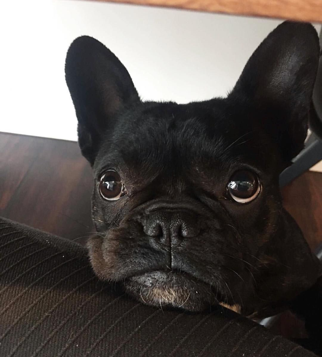 Best Food For French Bulldog Puppies Australia References