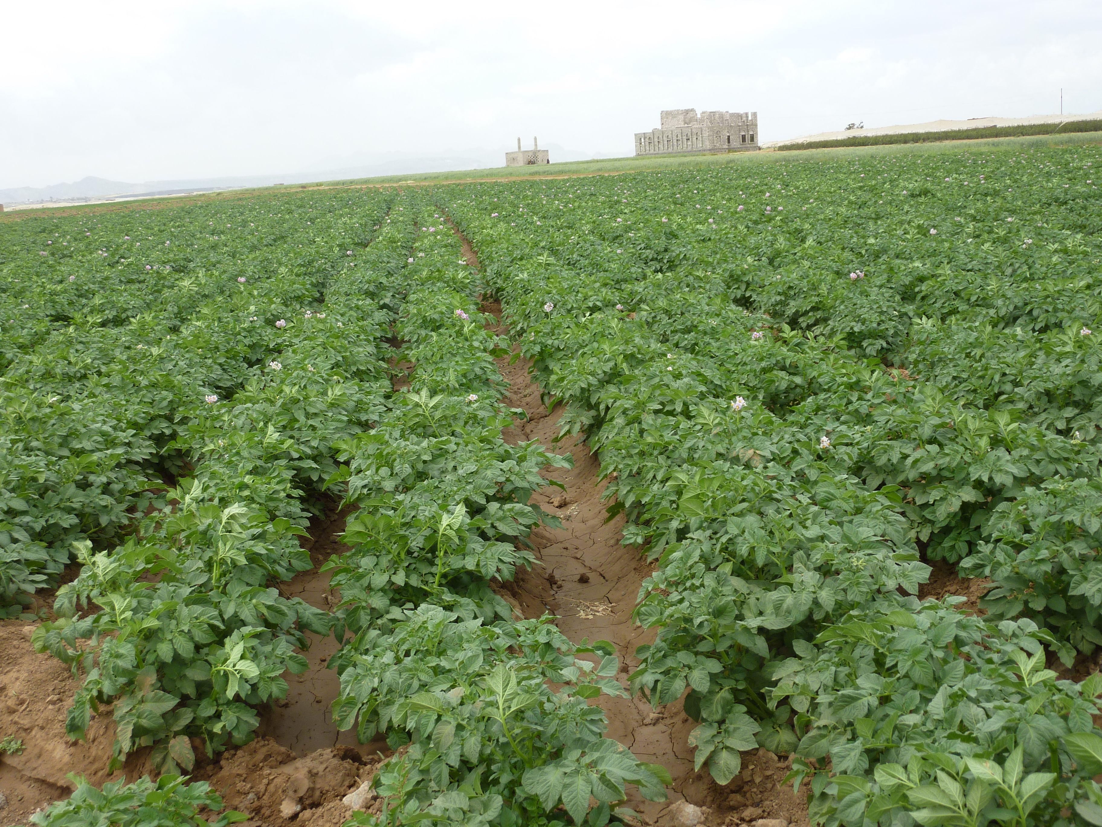 وزارة الفلاحة الإنتاح المتوقع من الزراعات الربيعية يغطي حتى نهاية السنة Plants