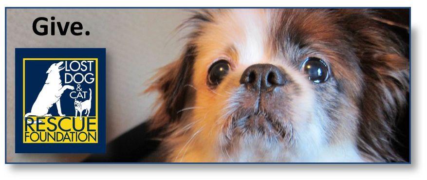Lost Dog Cat Rescue Foundation Arlington Va Losing A Dog