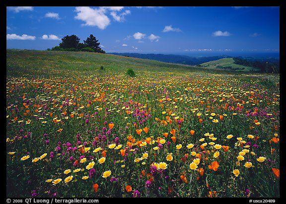 Palo Alto Wildflowers Near Sf Bay Area Favorite Places