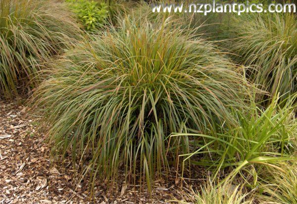 Nz Grasses For Landscaping Driveway planting ideas nz google search landscaping ideas driveway planting ideas nz google search workwithnaturefo