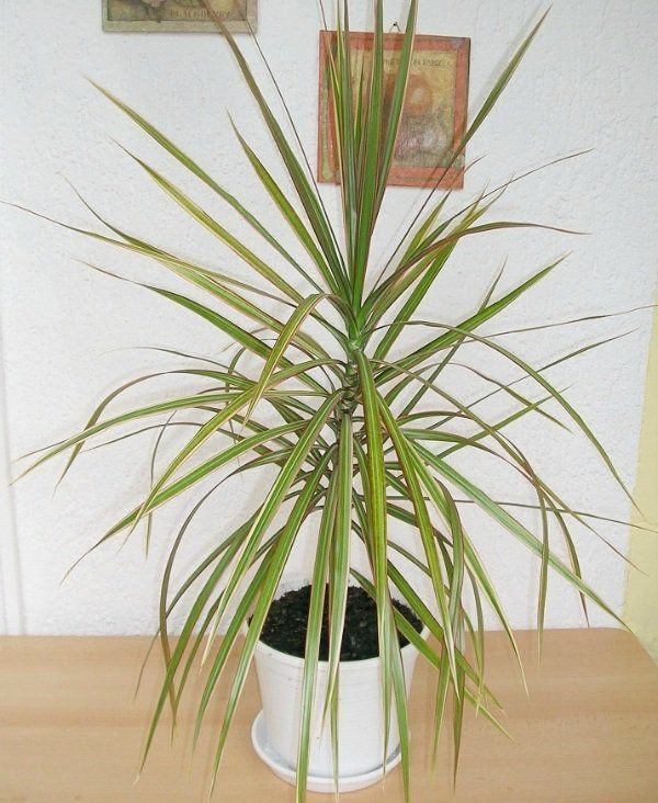 eeb61766a98c61a0b094e403206ce084 Care For Indoor House Plants on care for indoor ferns, care for large house plants, care for running house plants, care for indoor bonsai plant, care for tropical house plants, care for indoor palm trees,