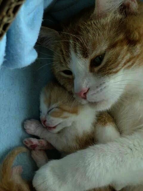 Kitten Meow Mp3 Download Each How To Draw Cute Kawaii Animals Book Under Kittens For Sale Irvine Gray Kitt Cute Cats And Kittens Pretty Cats Kittens
