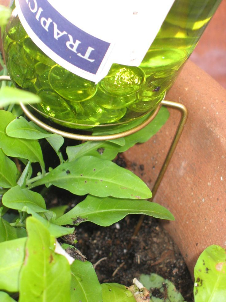 plant watering bottles | Wine Bottle Waterer..great idea for watering plants if you have to be ...