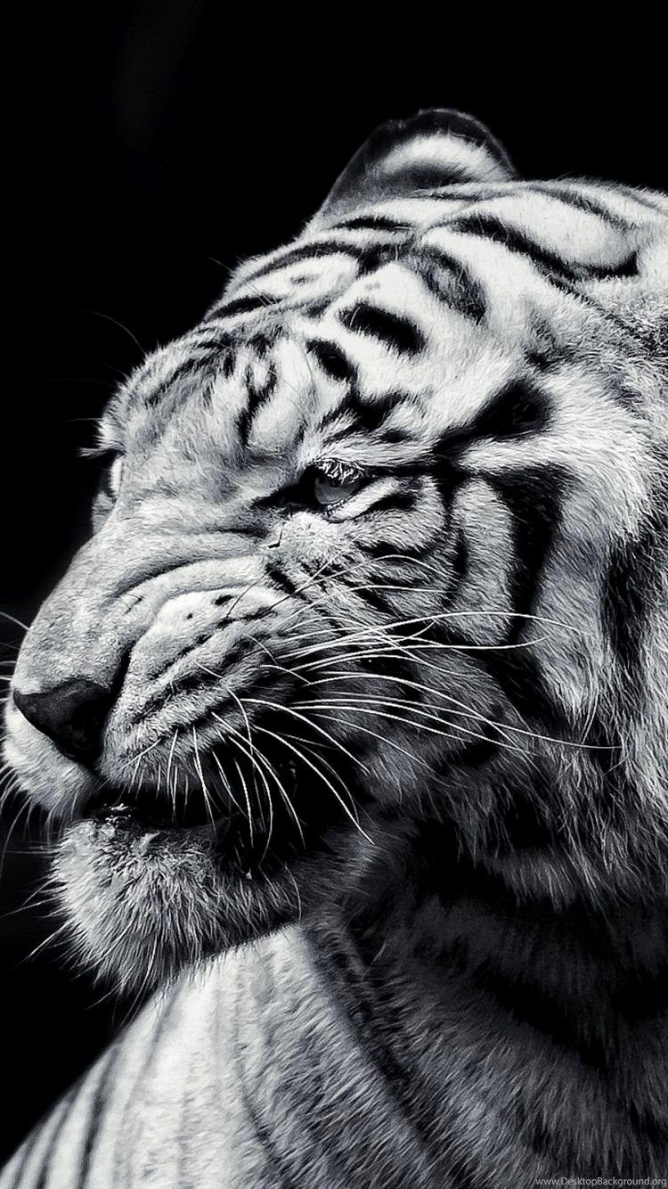 Tiger Wallpaper 4k Iphone Gallery Hewan Kucing Hitam
