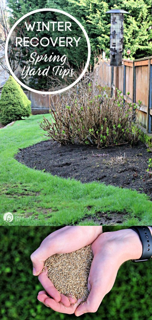 Spring Lawn Care Tips - Winter Recovery