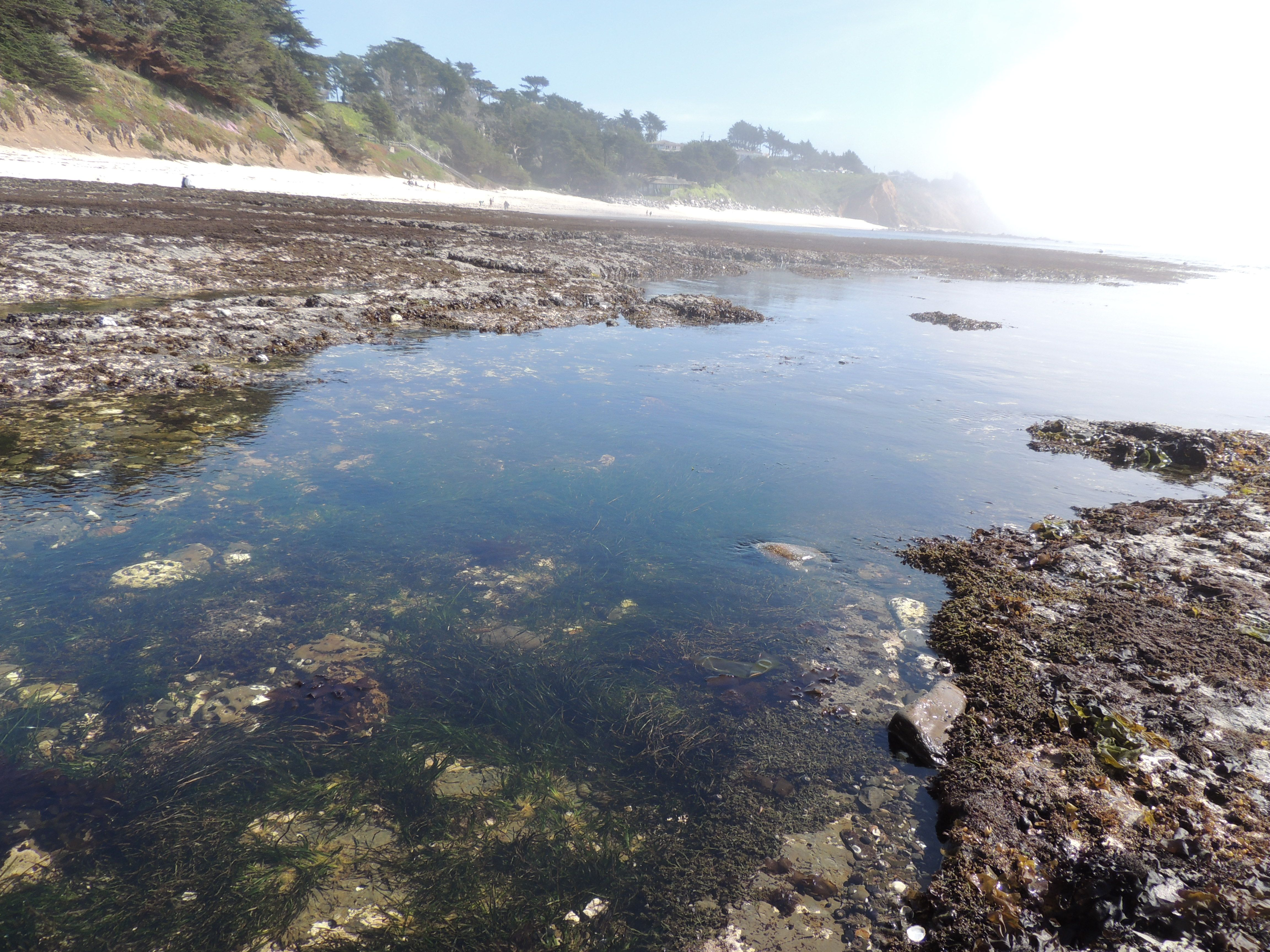 The Fitzgerald Marine Reserve Serves As Both A Photographer 39 S Hot Spot And A Tide Pool Paradise The Tide Pools Tide Pools Moss Beach California Wallpaper