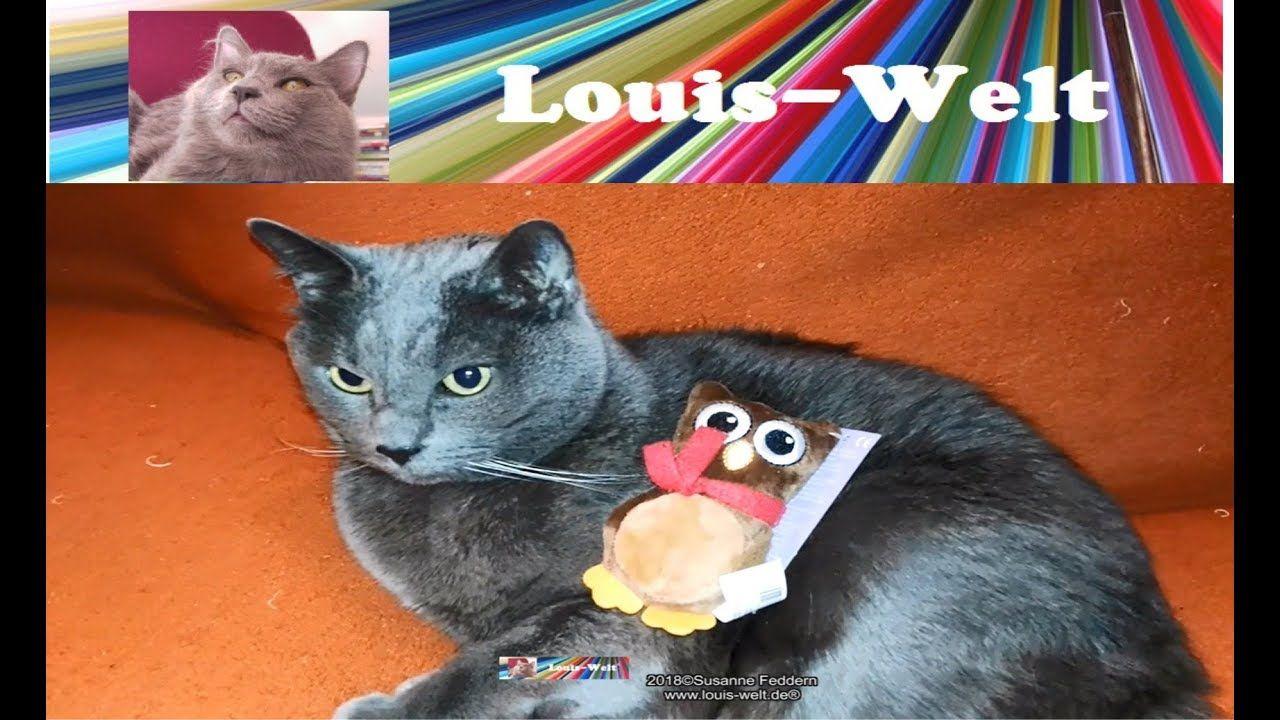 Pin Von Maria Anna Auf Katzen Bilder Baby Katzen Katzenbabys