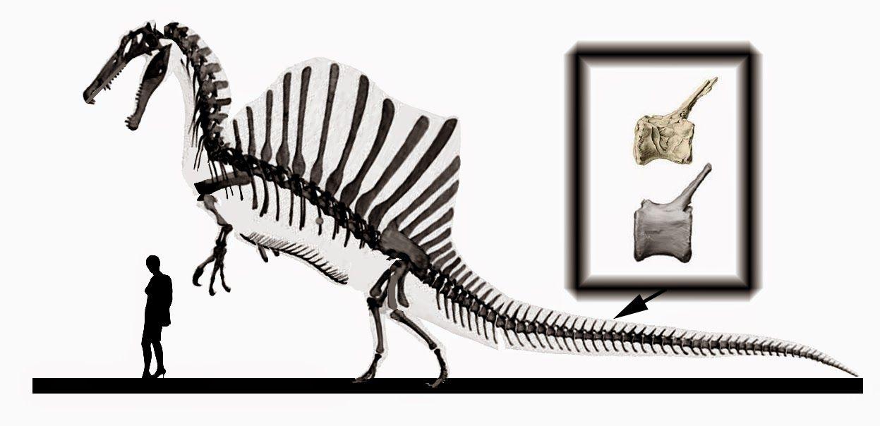 Spinosaurus en posture tripode | dino boooooones | Pinterest ...