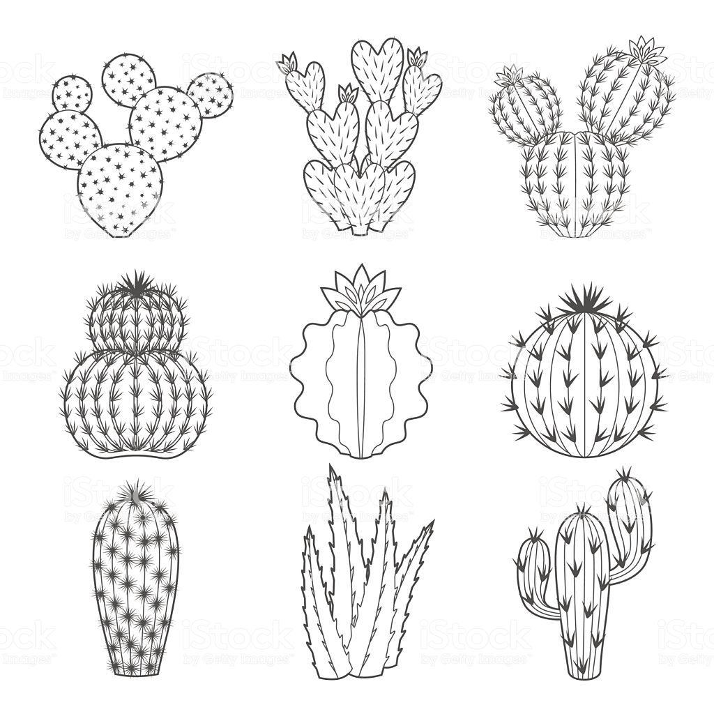 Vector Set Of Contour Cactus And Succulent Plants Decorative Cactus Illustration Cactus Drawing Cactus Doodle