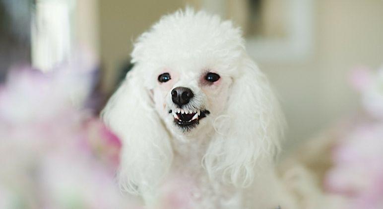 Unused Accessories Dog Diy Pictures dogsofinstgram