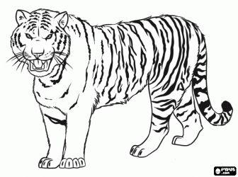 Descargar las mejores imagenes de tigres para colorear e imprimir
