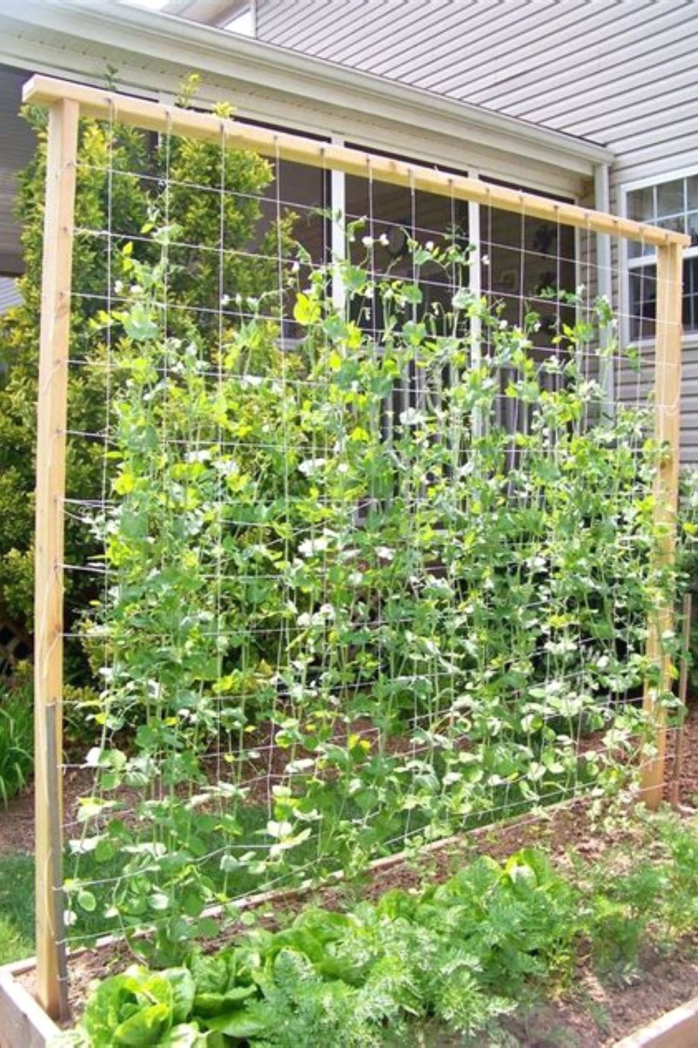 Creative Trellis Ideas To Add Beauty To Your Garden Pea Trellis Garden Trellis Garden Layout