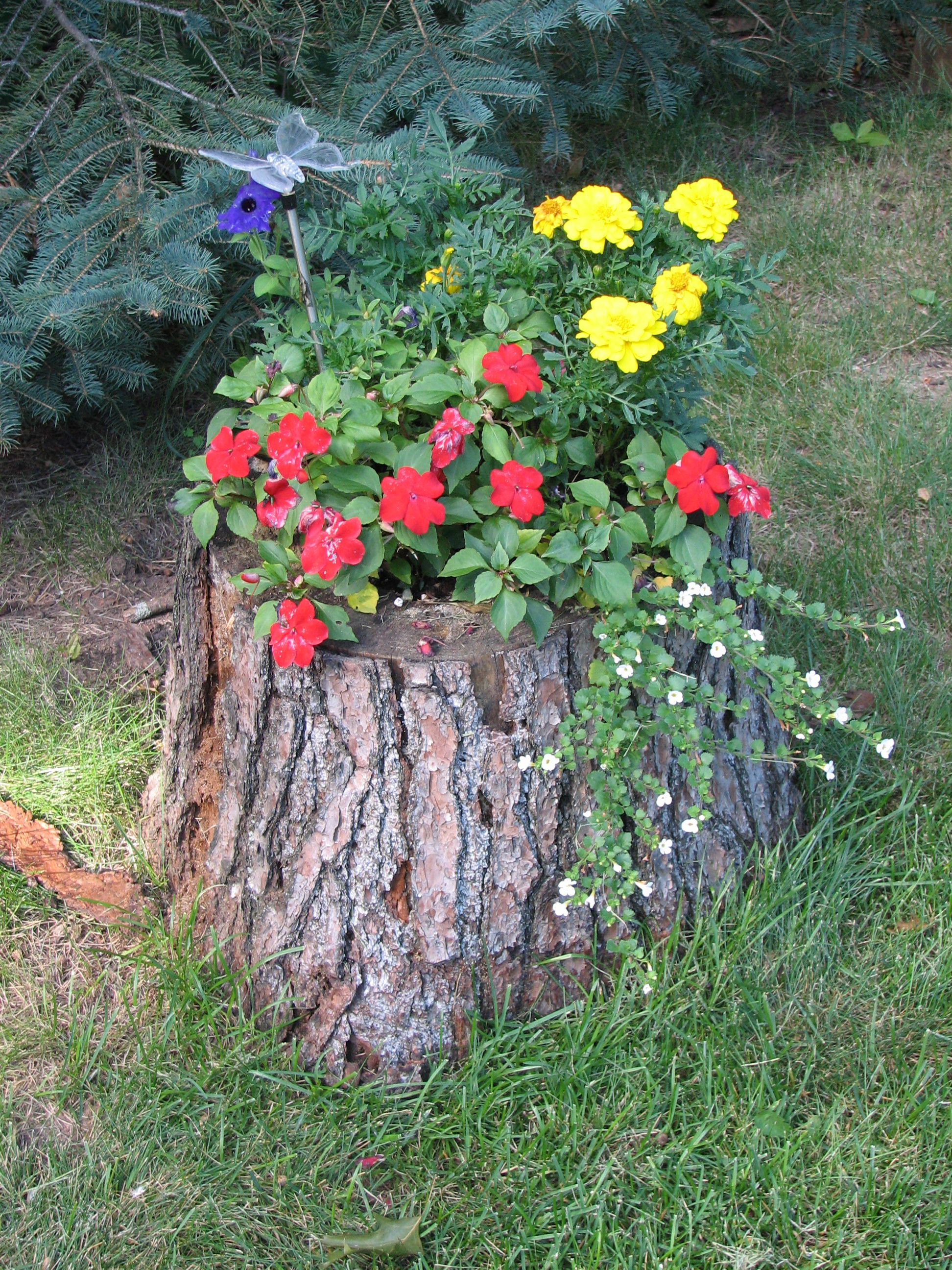 Tree stump flower pot my sister in law 39 s gardening pinterest tree stump flower and gardens - Flowers that grow on tree trunks ...