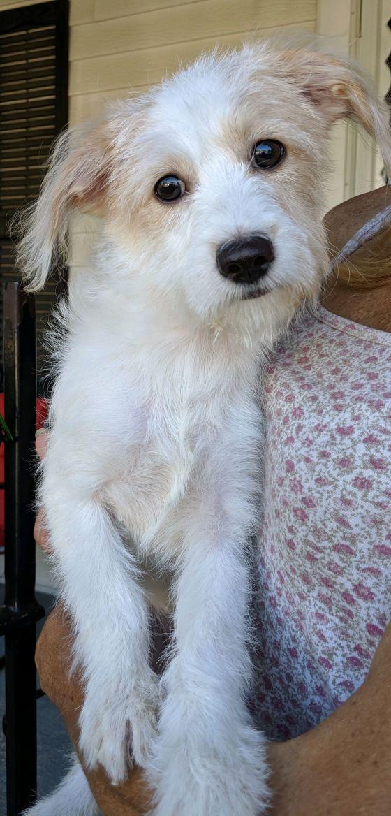 Dog For Adoption Michelle A Maltese Terrier Mix In Dayton Oh Petfinder Puppy Adoption