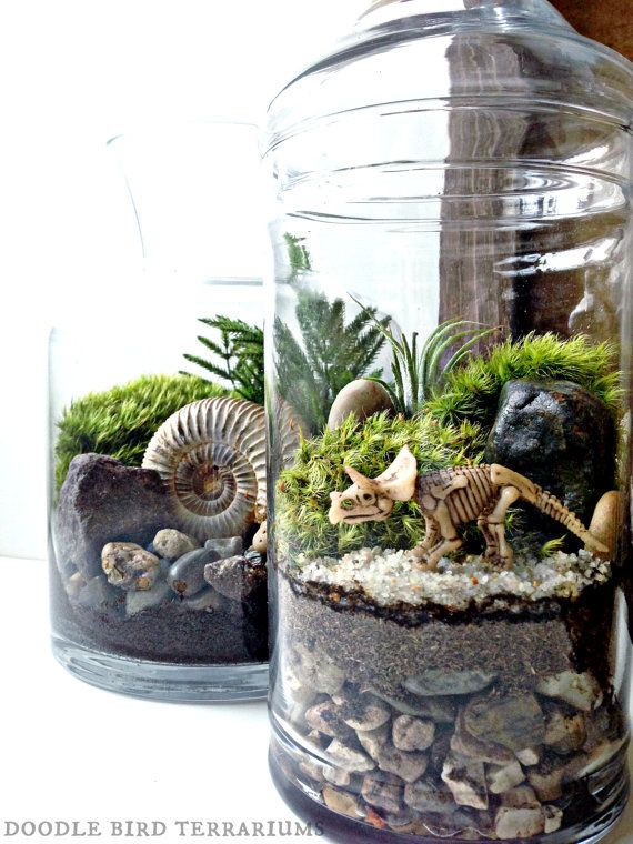 dinosaur fossil terrarium with prehistoric dinosaur bones live plants in display jar. Black Bedroom Furniture Sets. Home Design Ideas