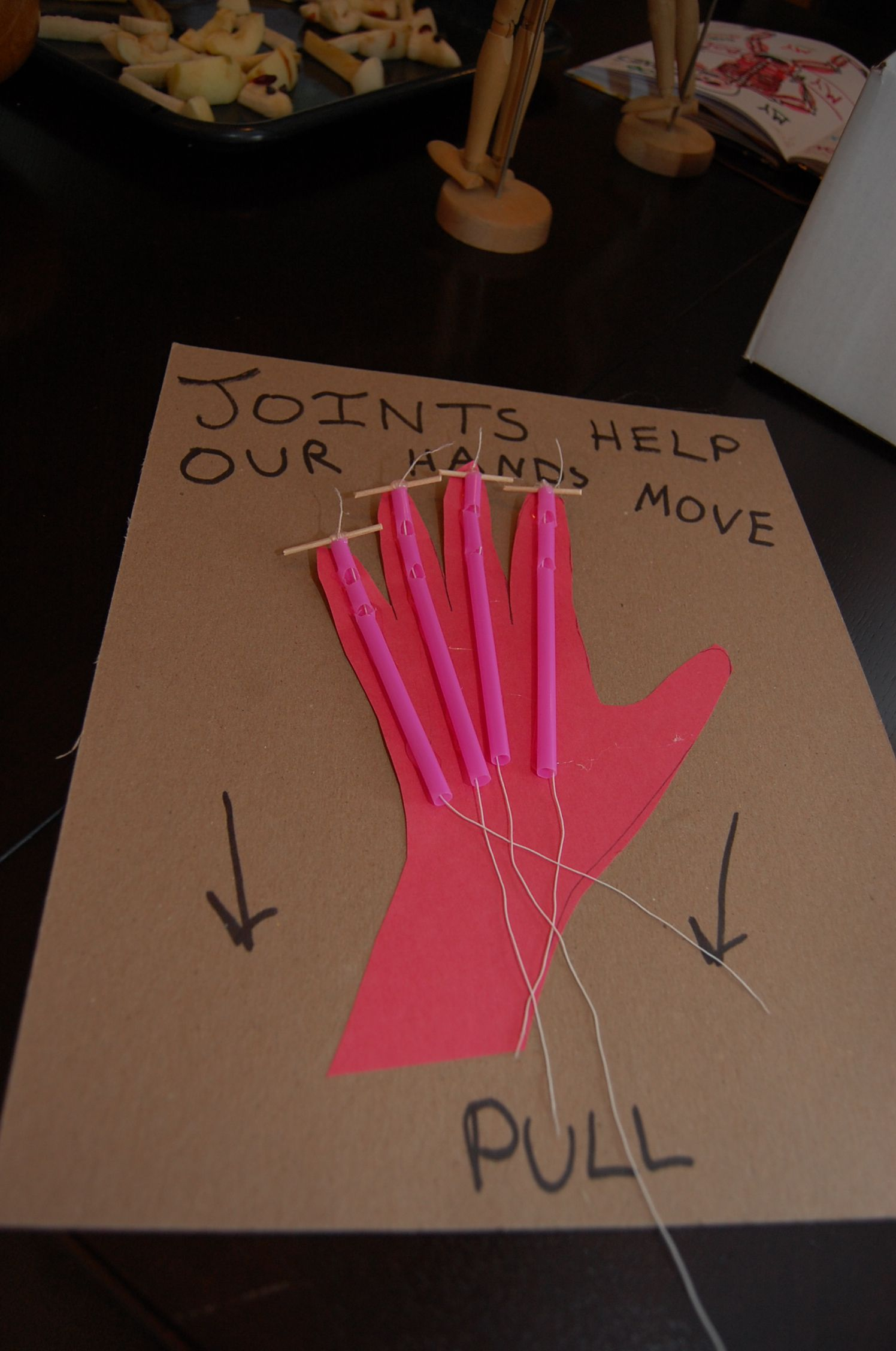 joint tendon hand model cardboard paper straws need to cut