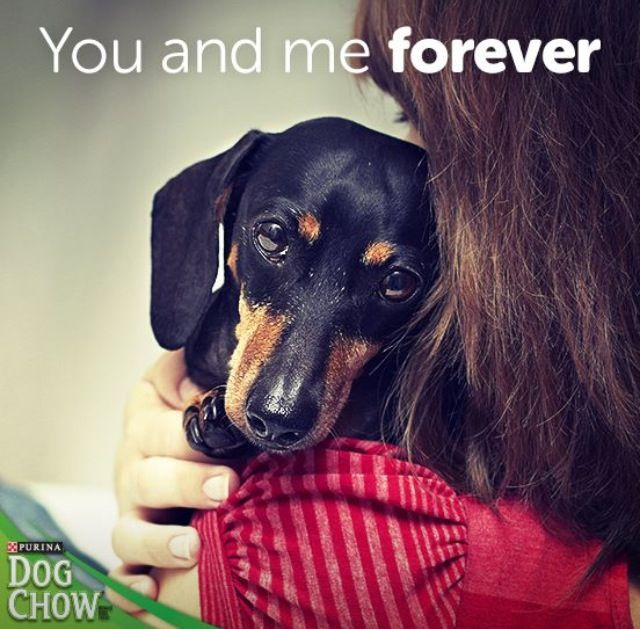 At Least In My Heart Awww Squeeee Dogs Dachshund Pets