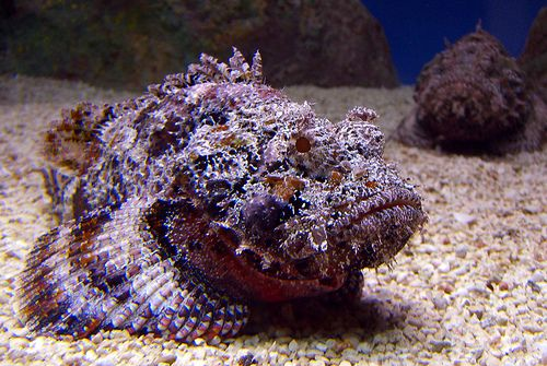 Wart like growths covering the skin of the reef stonefish allow for a remarkable disguise. Source.