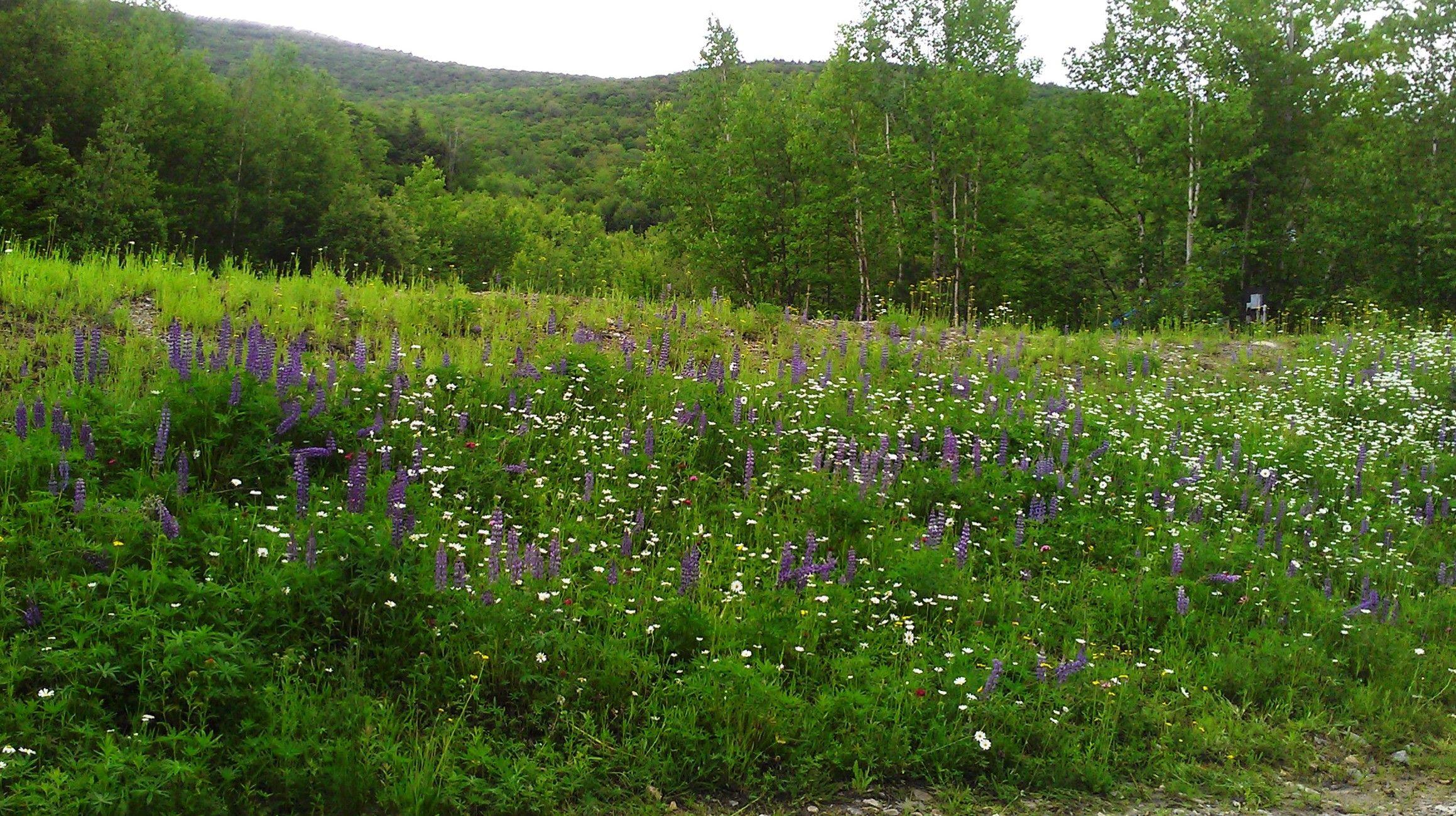 Spring Flowers at South Peak