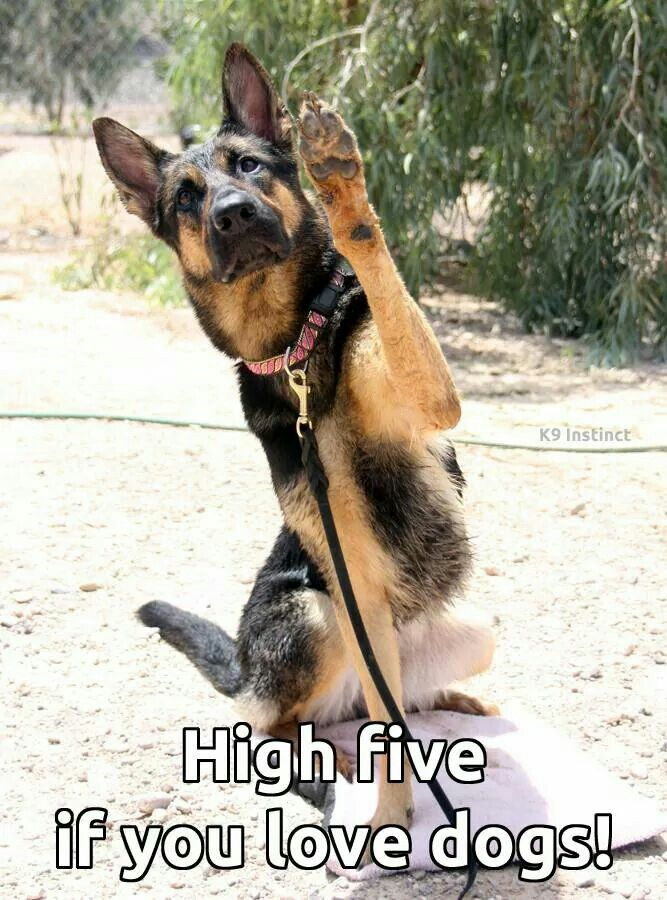 High Five Dogs Animals Dogs And Puppies