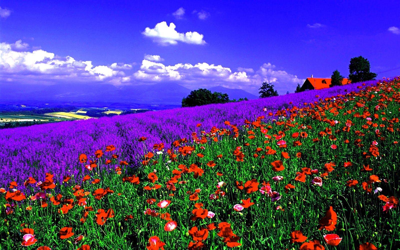 Paisajes de flores de flores flores de colores - Fotos de flores bonitas ...