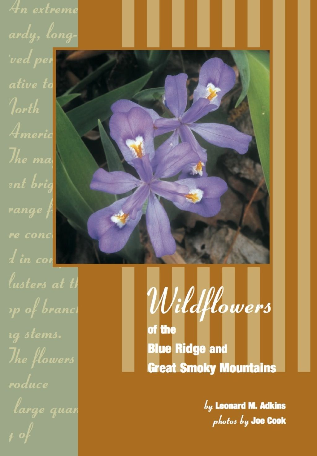 Wildflowers Of Blue Ridge And Great Smoky Mountains (eBook