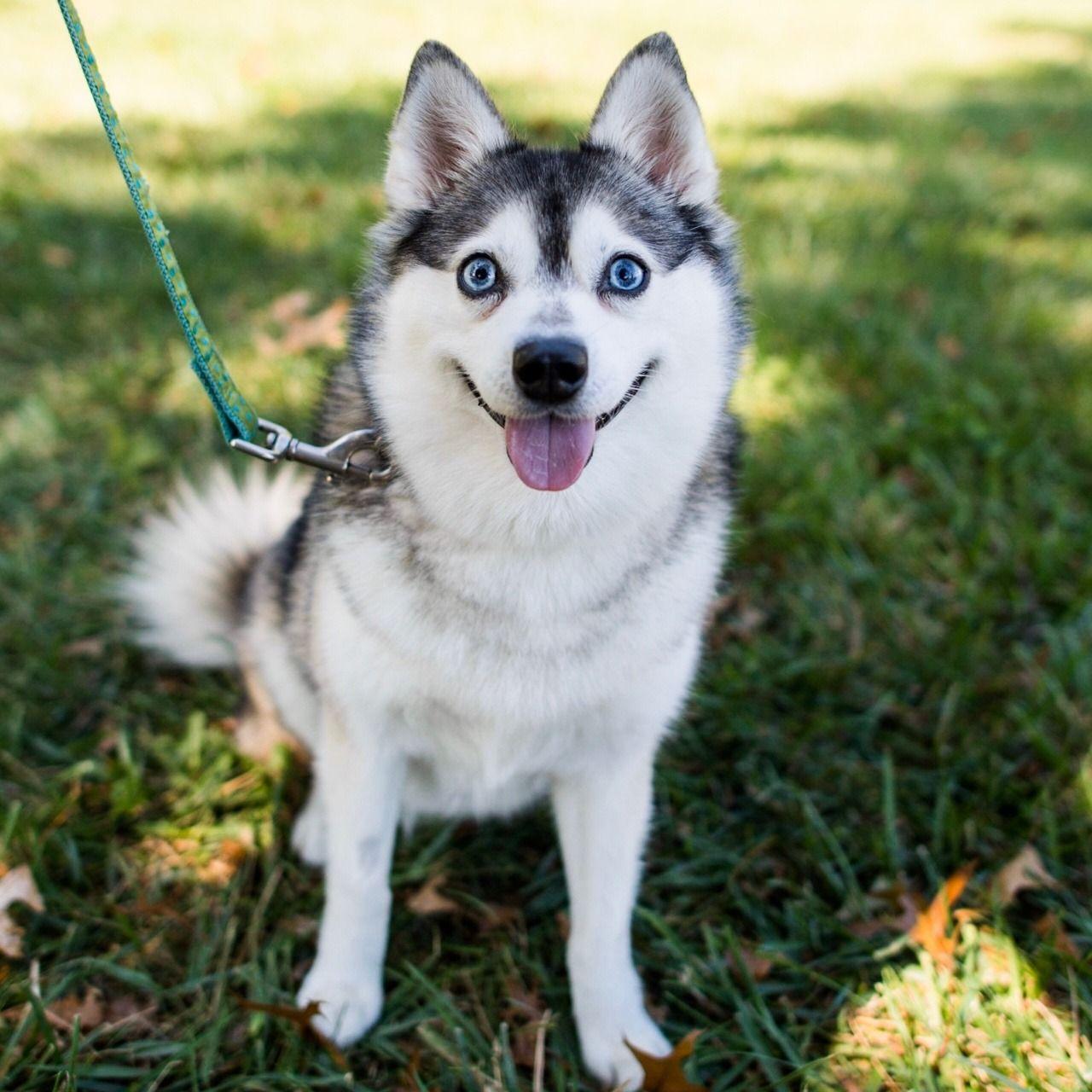 The Dogist Dog Breeds Dogs Husky