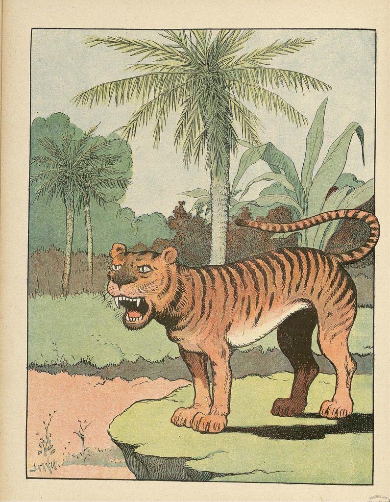 Cat without spots, only stripes. Illustration art