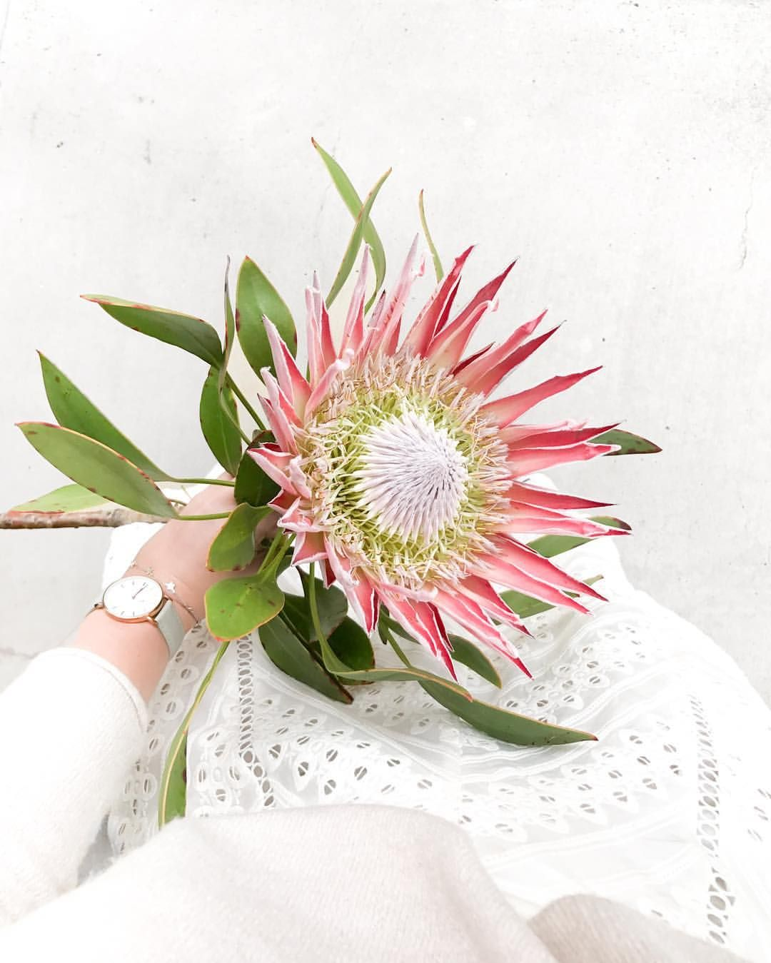 See This Instagram Photo By Jasminedowling 2 955 Likes Beautiful Flowers Pink Flowers Love Flowers