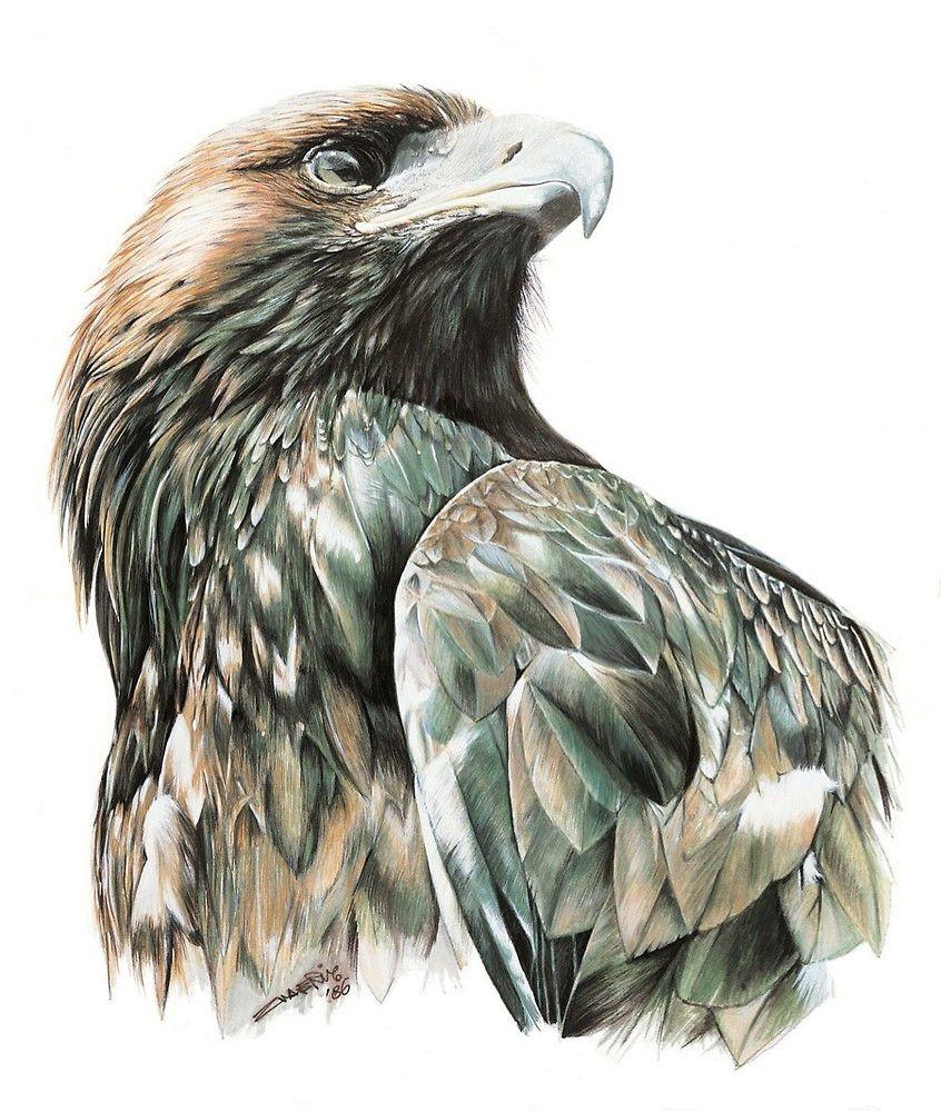 Adler Tattoo Vorlage