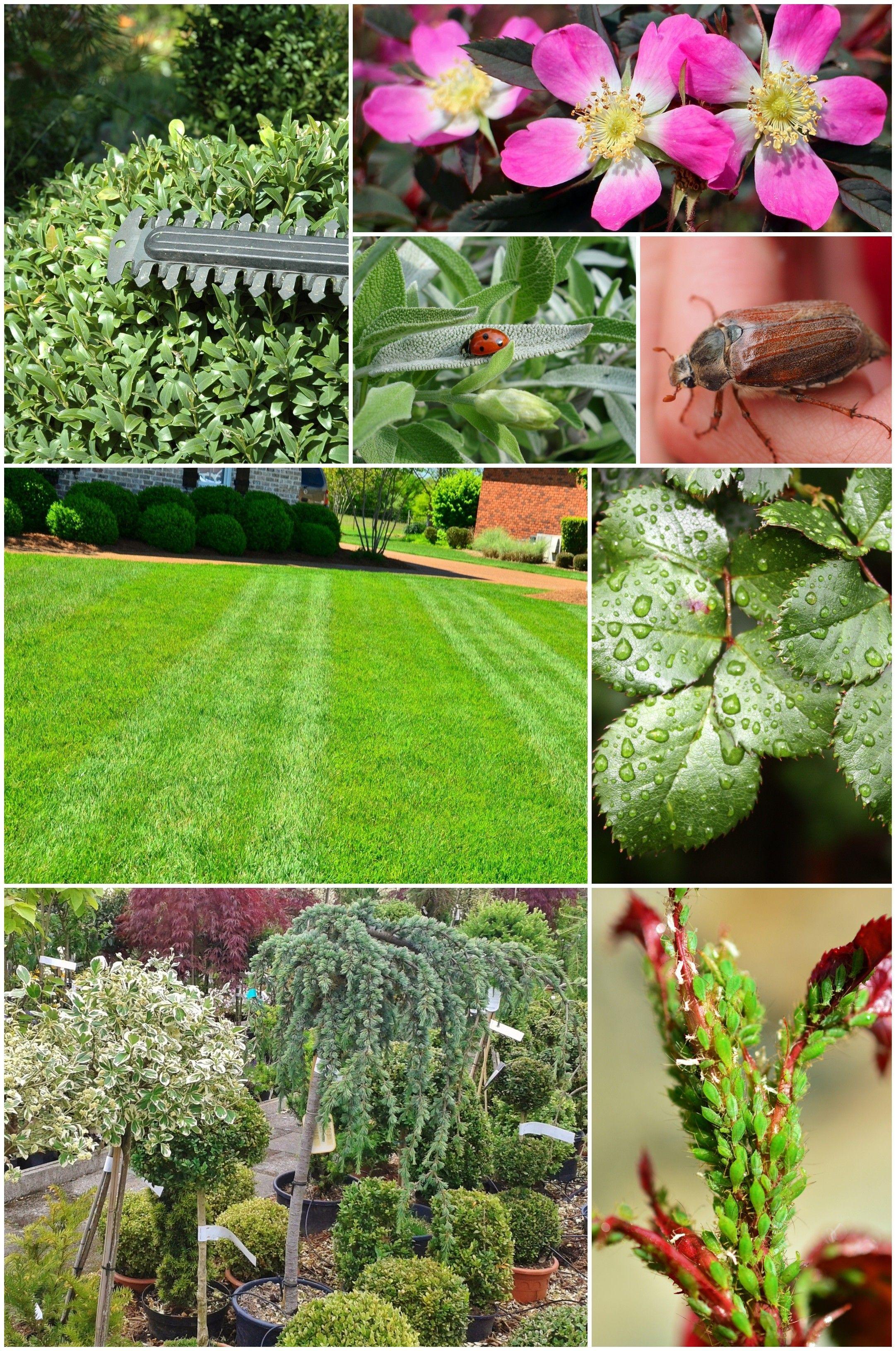 Kalendarz Ogrodnika Czerwiec Co Robic W Ogrodzie Zielony Ogrodek Plants