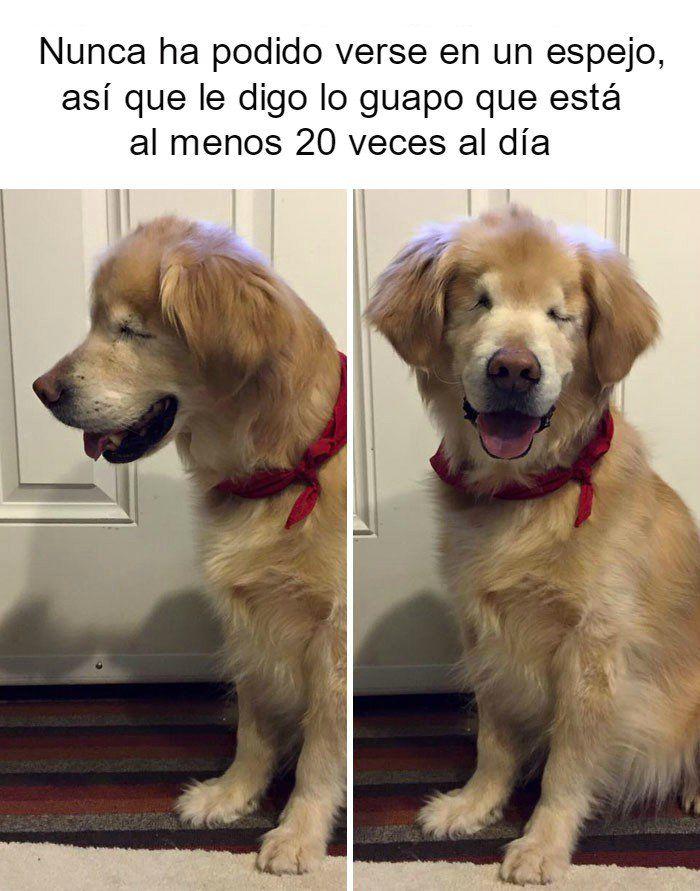 Perrito Feliz 4 Memes Perros Perros Graciosos Memes De Perros Chistosos