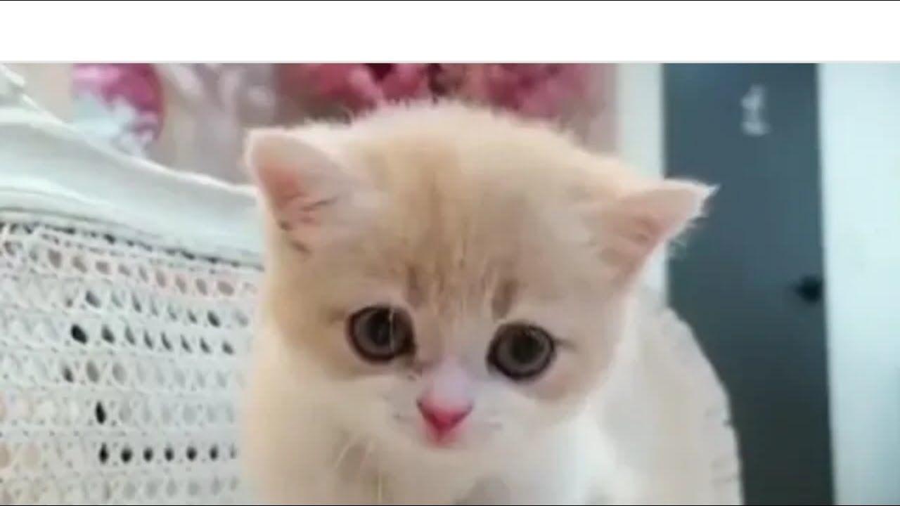 Cute Cat Short Whatsapp Status Video Youtube Funny Cat Videos Cute Cat Gif Cute Baby Cats