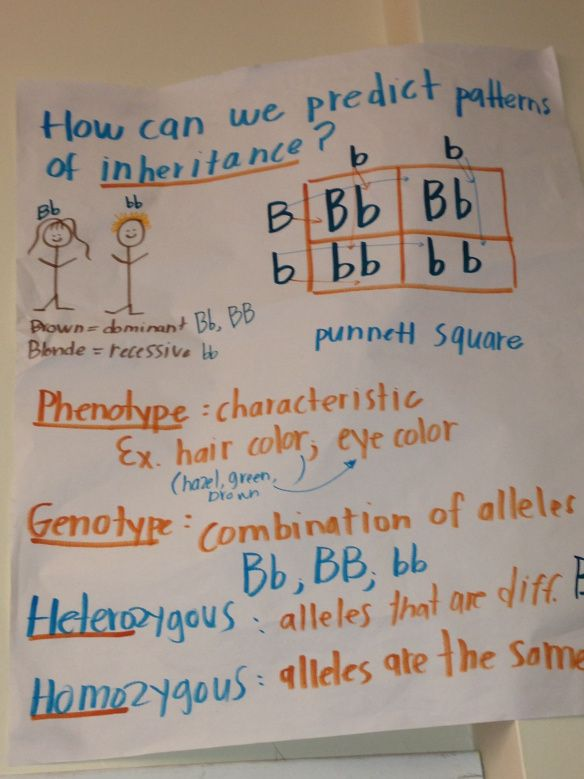 Punnett square anchor chart