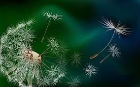 Image result for фантазийные цветы